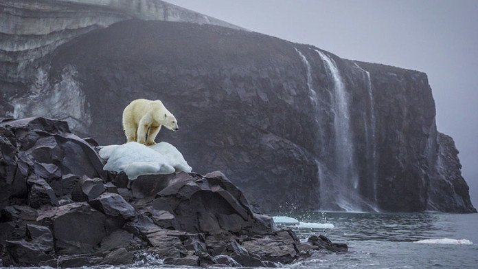Cory Richards, fotografo di National Geographic, ha fotografato l'orso polare