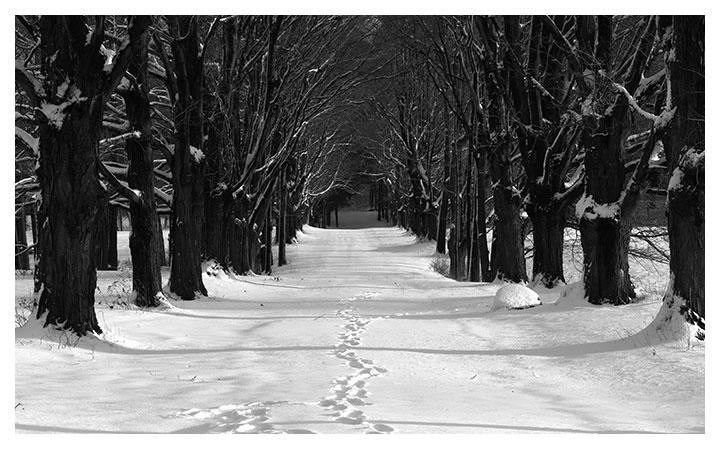 Fotografare sulla neve con l'aiuto di un esposimetro