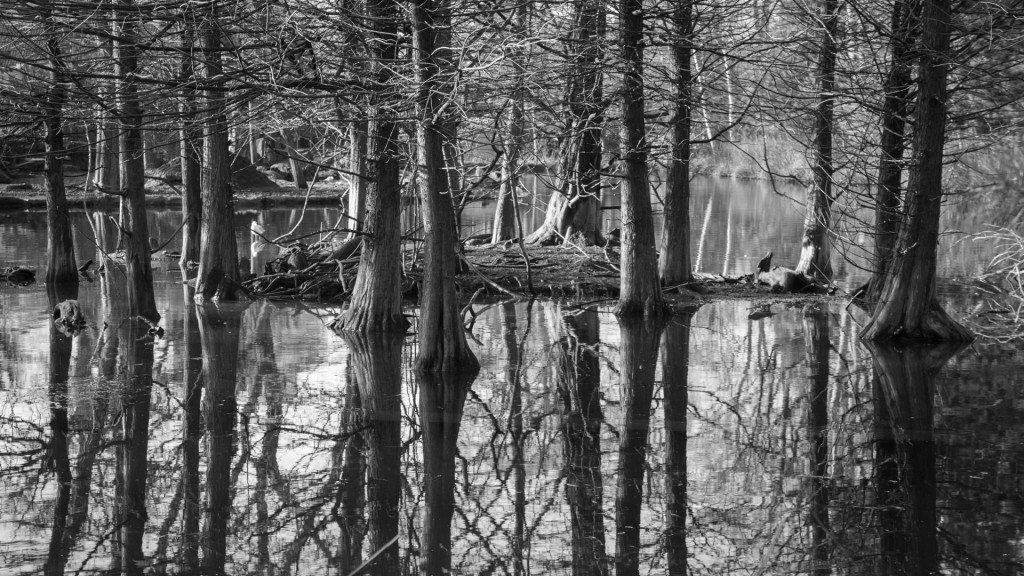 foresta-in-bianco-e-nero
