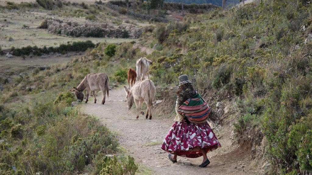 Una-donna-segue-i-suoi-asini-con-un-carico-di-legna-sule-spalle