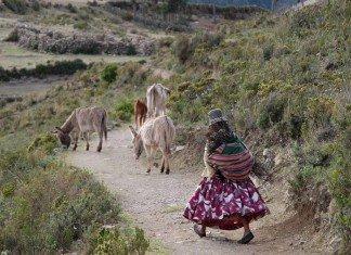 Una-donna-segue-i-suoi-asini-con-un-carico-di-legna-sule-spalle-life is a travel