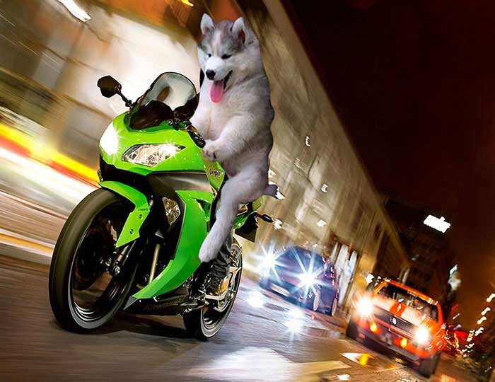 husky-photoshopbattle11