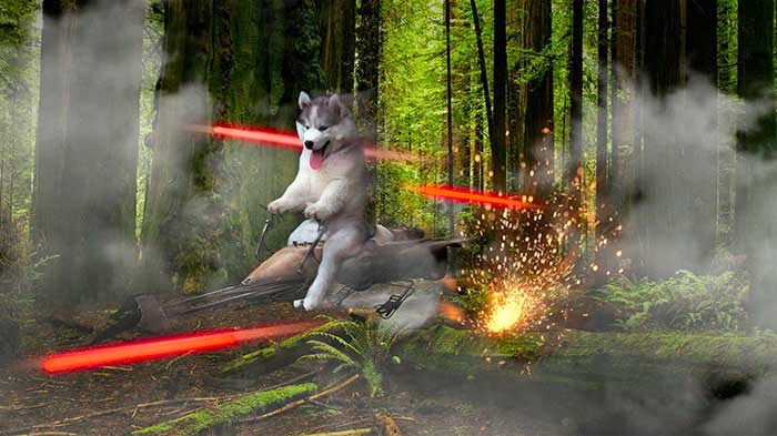 husky-photoshopbattle3
