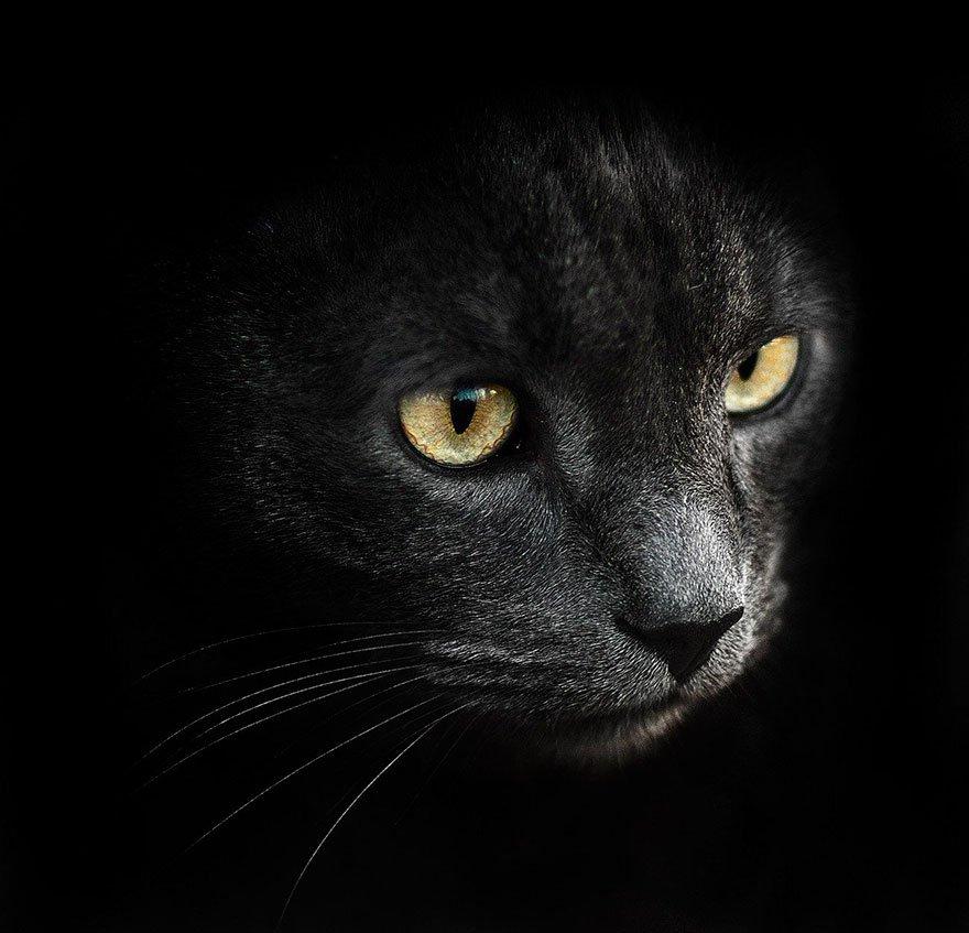 sergey-polyushko-gatto-nero