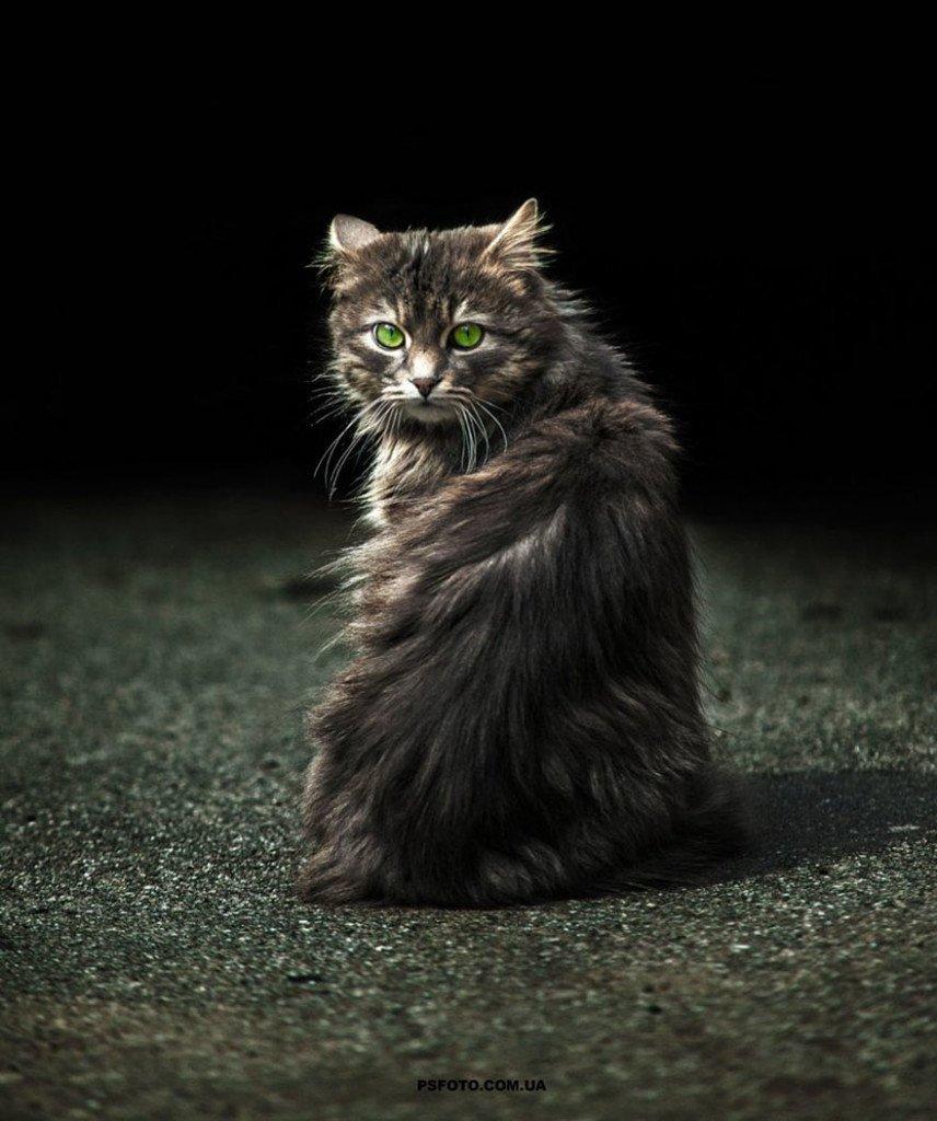sergey-polyushko-gatto-occhi-verdi