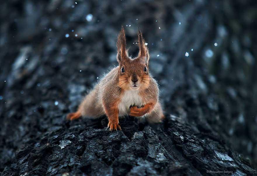 sergey-polyushko-scoiattolo