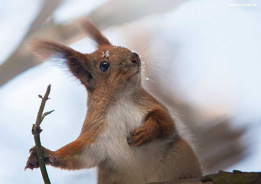 sergey-polyushko-scoiattolo2
