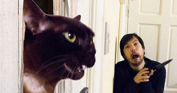 film famosi con il gatto