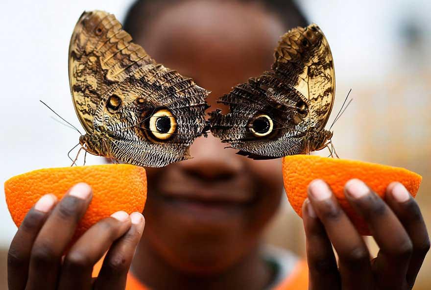 Due farfalle che formano un gufo