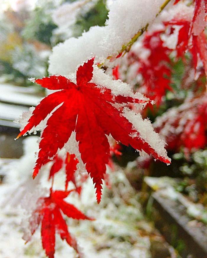 Tokyo con la neve di Aryan