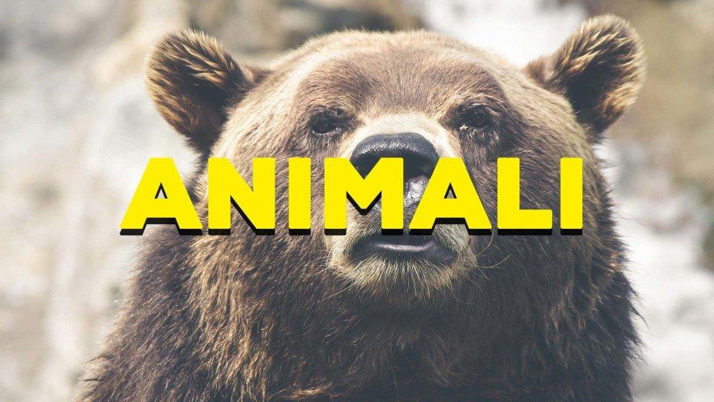Le fotografie degli animali inviate alla redazione
