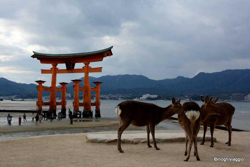 """Fotografia di Cristina Taddei, In Ogni viaggio - """"Giappone"""""""