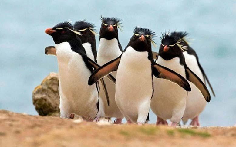 Foto di animali in posa divertenti