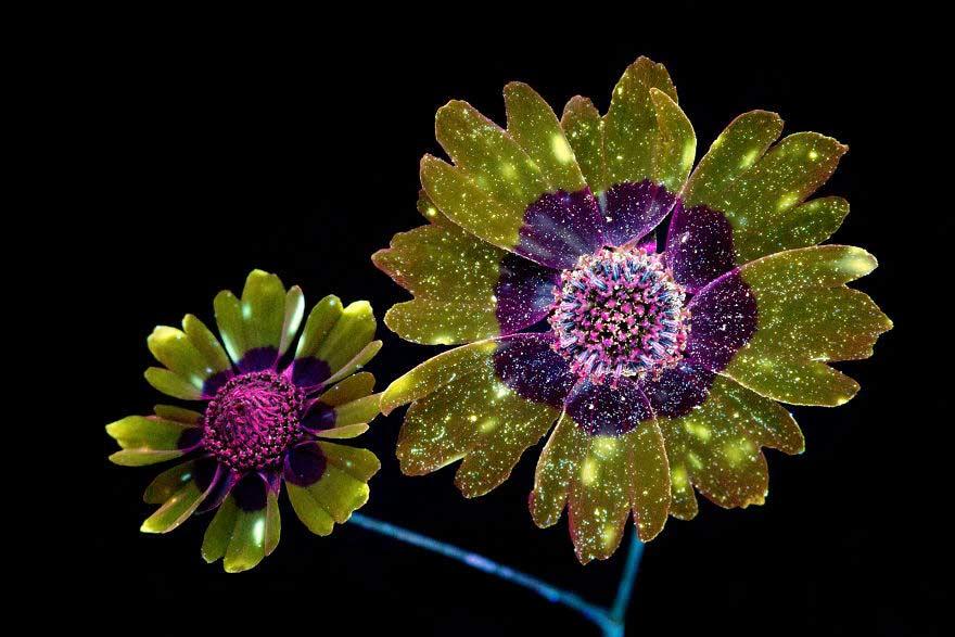 Fiori con ultravioletti