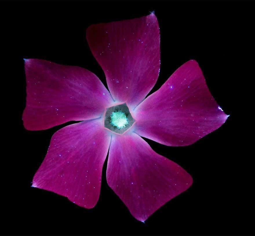 Foto con raggi ultravioletti