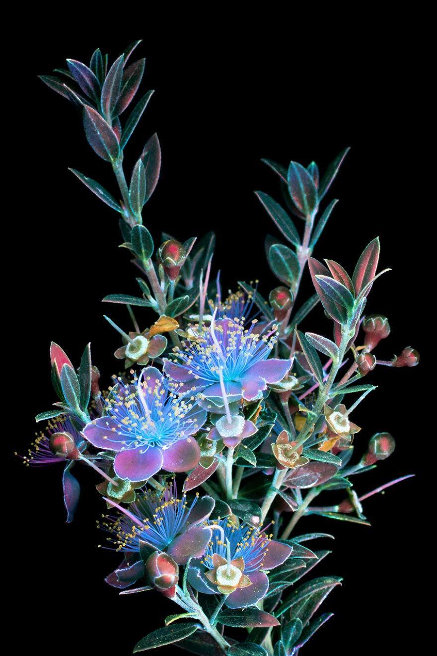 Le foto dei fiori con raggi ultravioletti