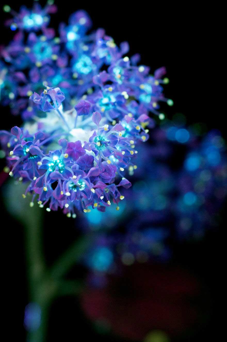 Foto di fiori al buio