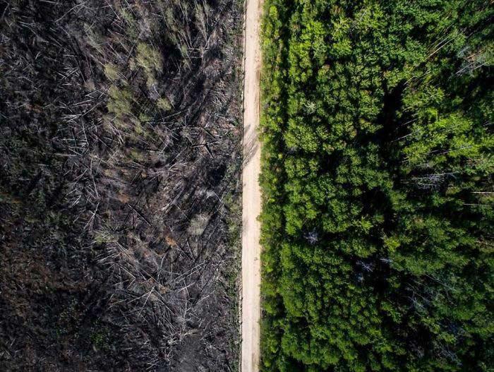 Una strada divide la foresta bruciata da quella rimasta