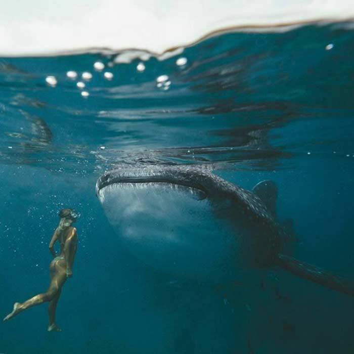 Jack Morris e Lauren Bullen, la coppia che guadagna viaggiando con una balena