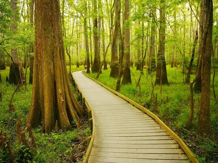 Parco nazionale Congaree, Carolina del Sud (Zach Holmes)