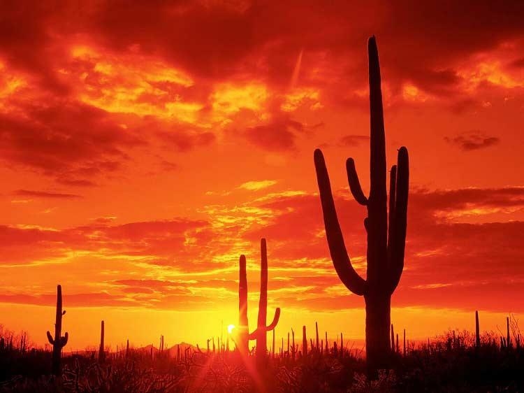 Saguaro National Park (Melissa Risgrynsgröt)