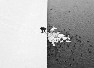 Foto simmetricamente perfetta in bianco e nero, uomo che da da mangiare alle anatre (Foto incredibili senza Photoshop)