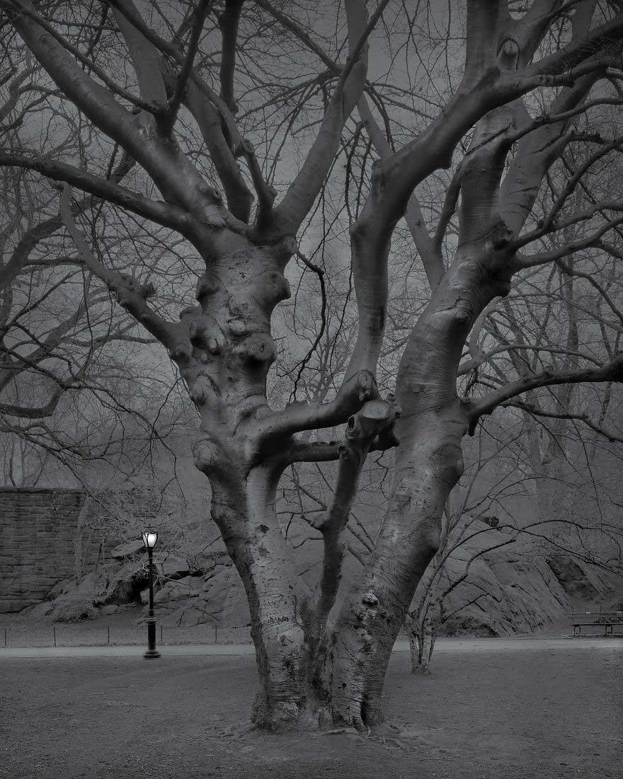 Insonnia a Central Park, di Michael Massaia