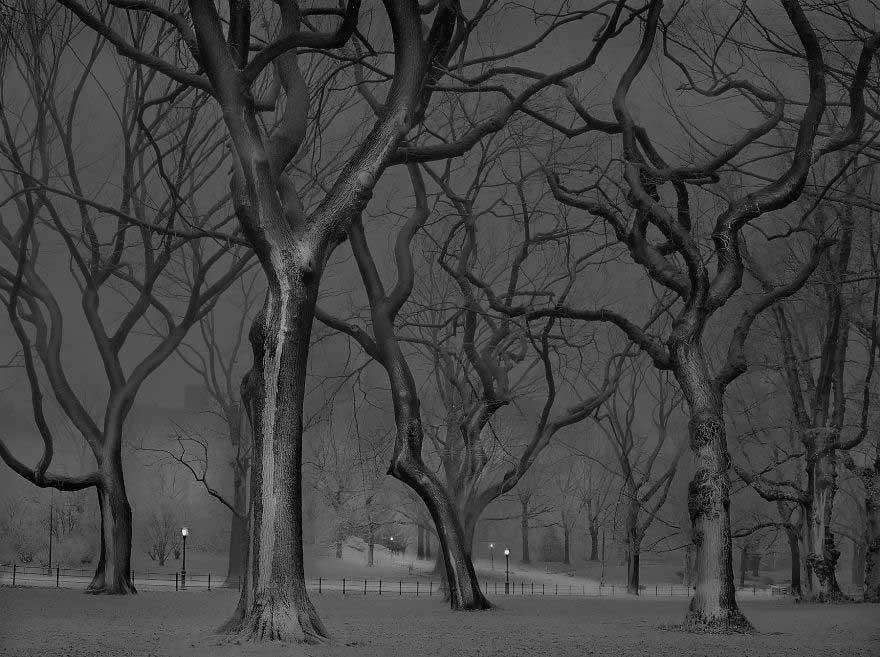 Foto di Michael Massaia a Central Park