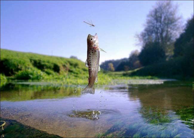Pesce in alto
