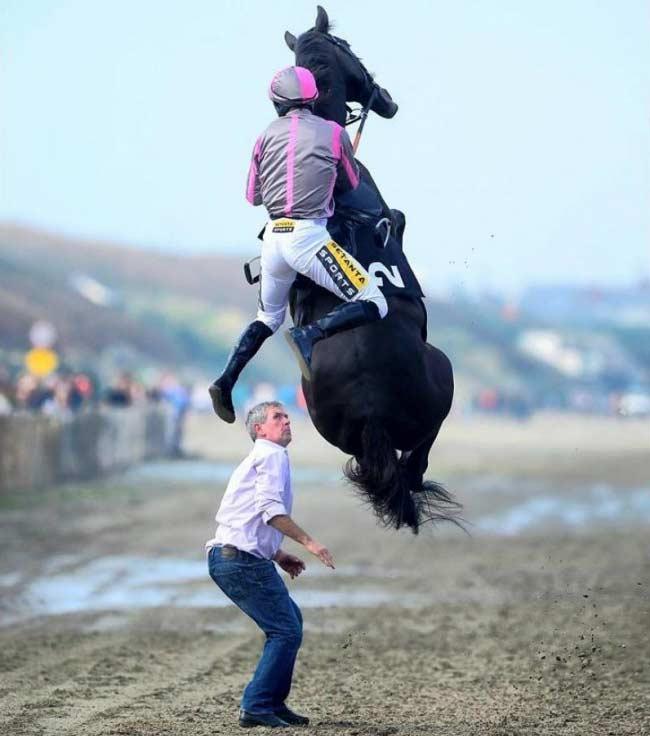 Cavallo che vola