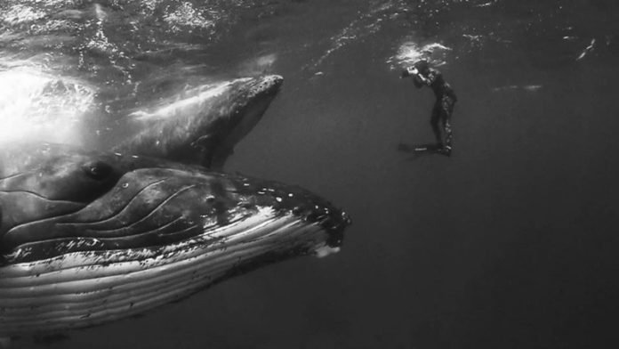 Giants di Jem Cresswell, le balene in bianco e nero