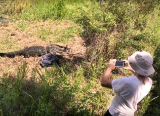Come non fotografare un alligatore