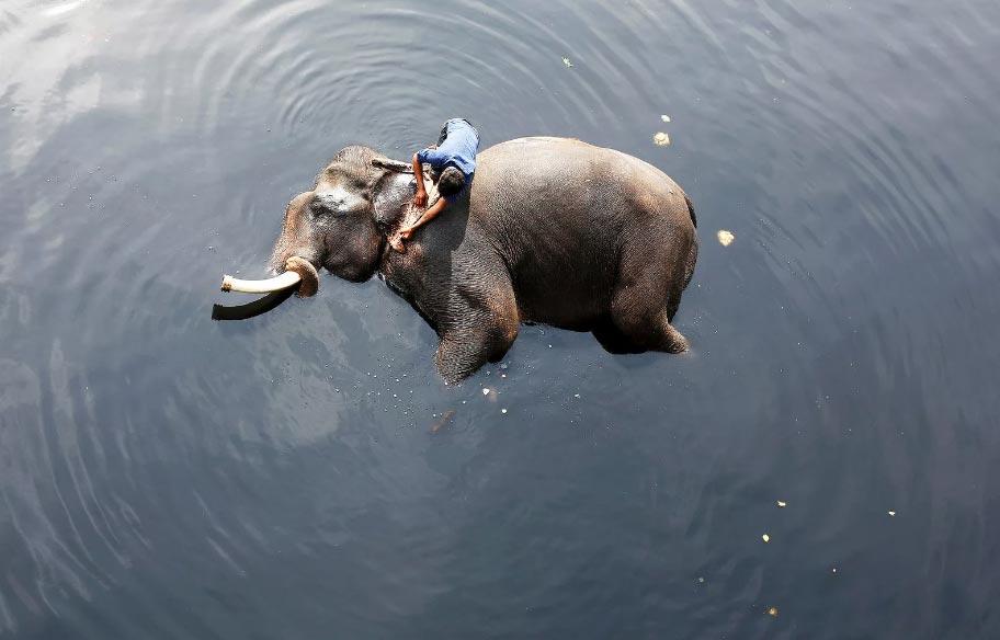 Elefante bagno nel fiume
