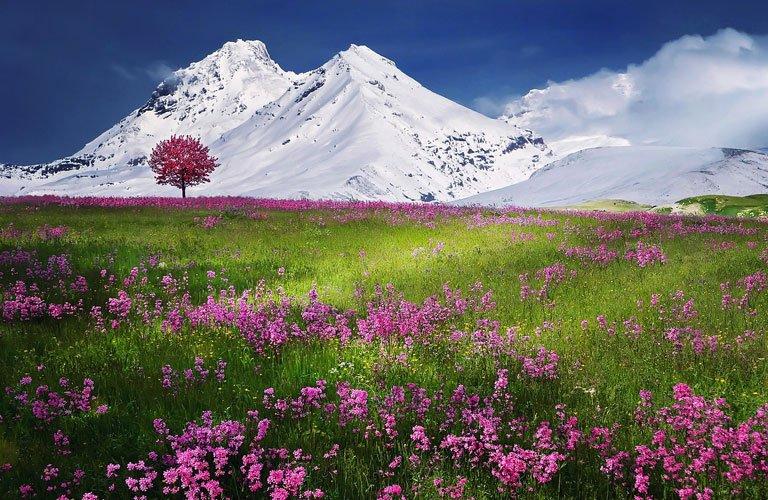 Una foto esempio dove la distanza iperfocale ha permesso di rimanere a fuoco sia i fiori in primo piano che le montagne sullo sfondo