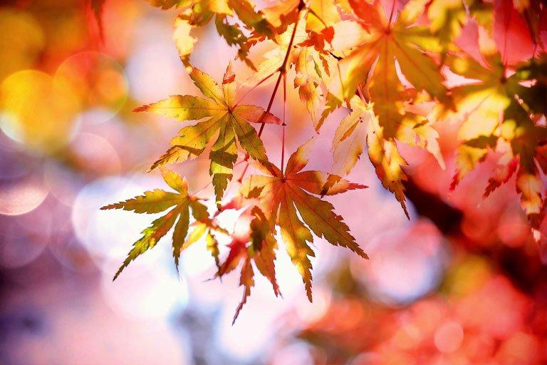 L'effetto Bokeh sulle foglie di un albero
