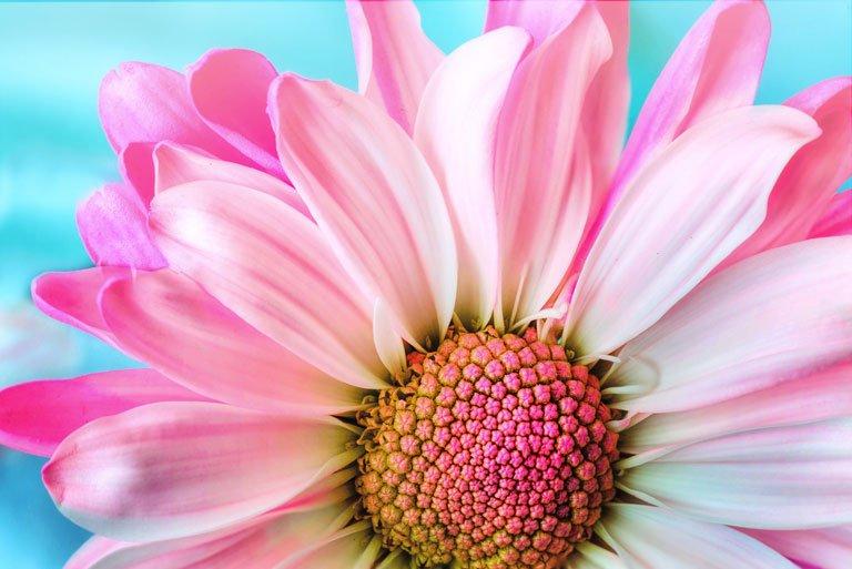 Macro foto di un fiore grazie all'utilizzo di un obiettivo macro