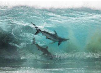 La foto degli squali dentro l'onda di Sean Scott