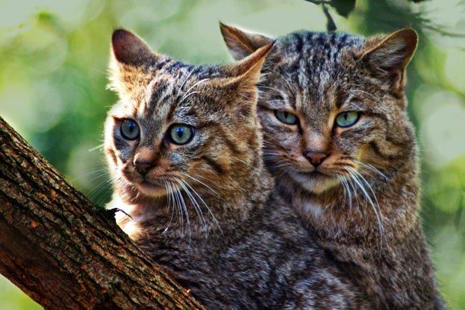 Foto dei gatti migliorata