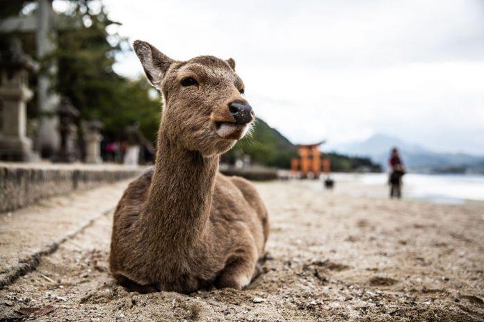 Foto finalista del concorso National Geographic 2019