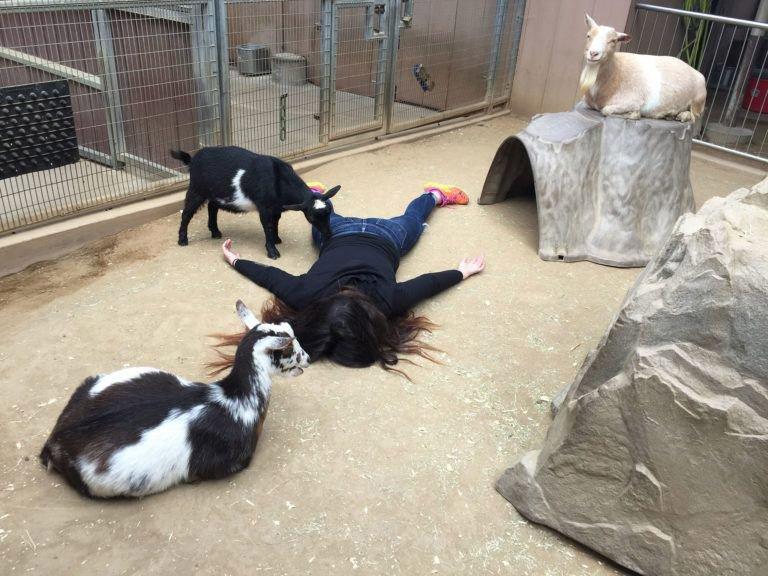 STEFDIES zoo di San_Diego
