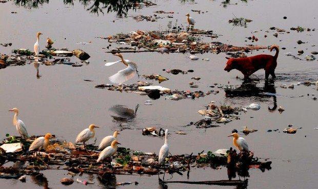 Foto mare inquinato