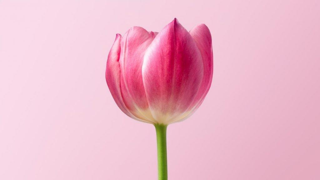 Come fare foto ai fiori