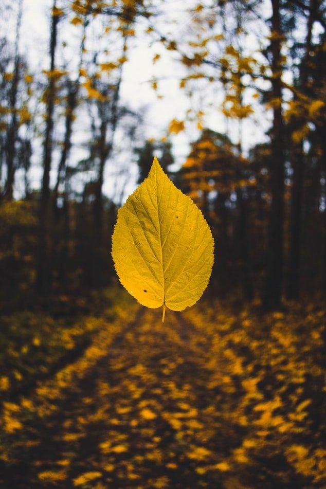 Fotografie di foglie in autunno