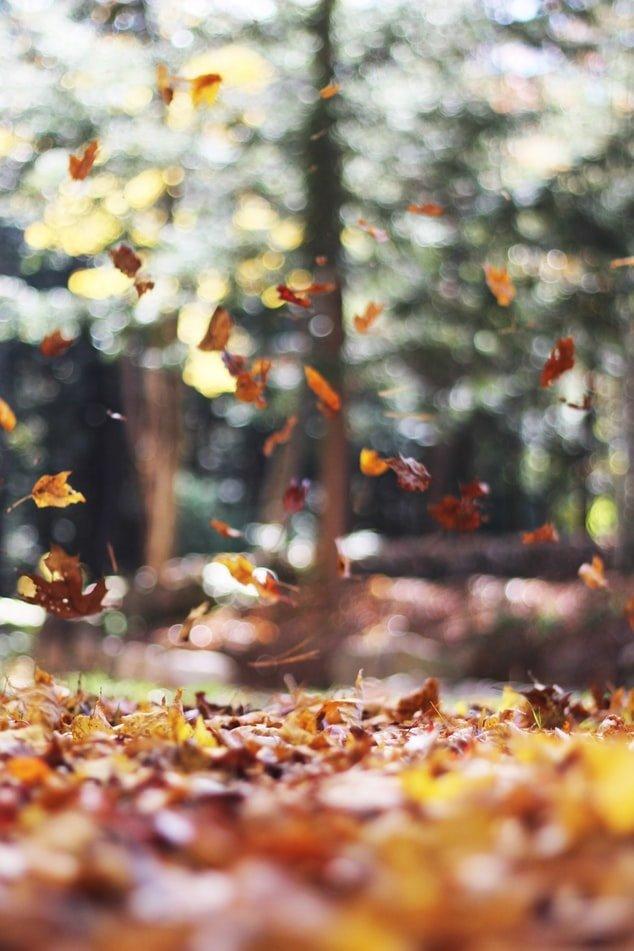 Foto di foglie in autunno