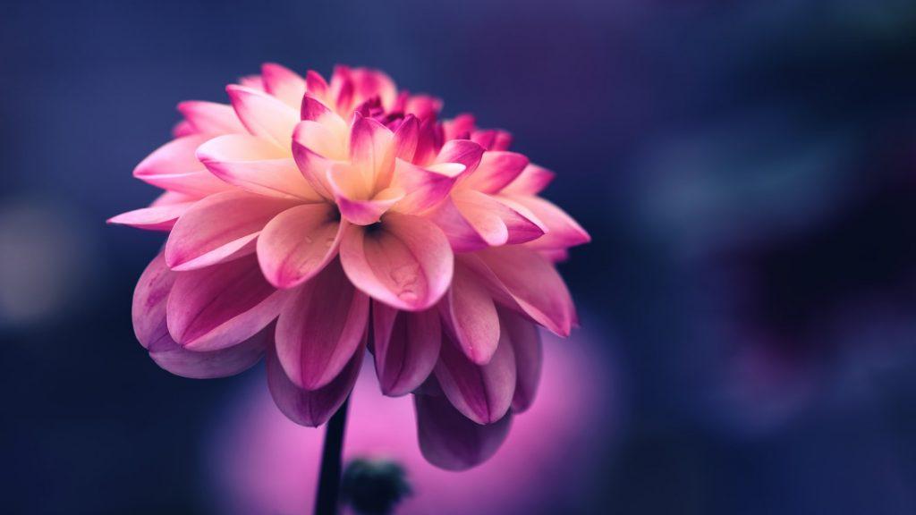 Belle foto di fiori