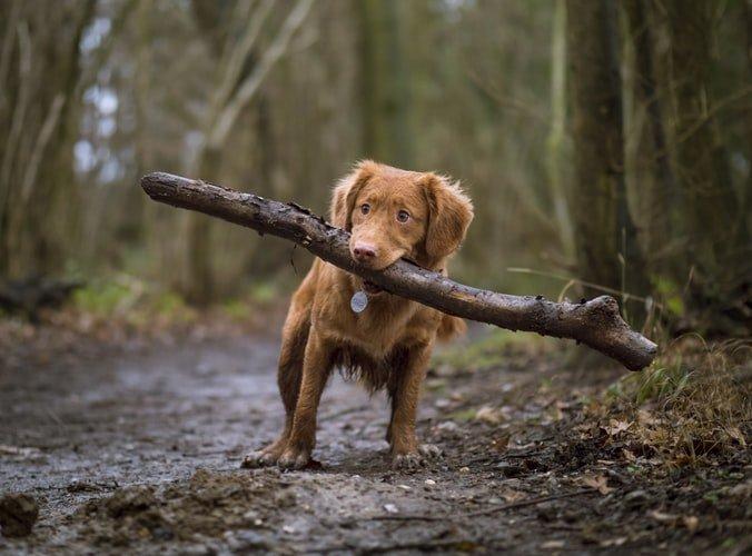 Foto creative con un cane