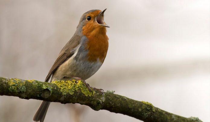 Obiettivi per fotografare gli uccelli