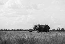 Frasi sulle fotografie in bianco e nero