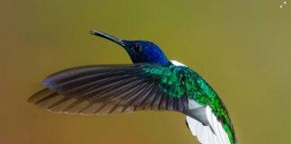 Immagini di uccelli in volo