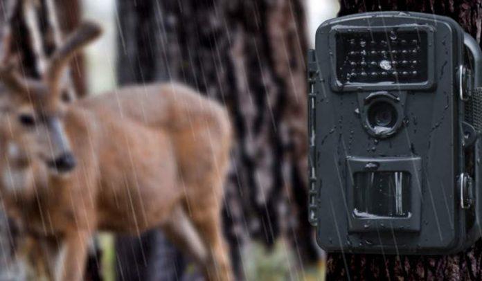 Fotocamera da caccia, le migliori fototrappole